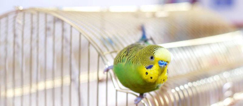 ¿Qué jaula necesita mi pájaro?