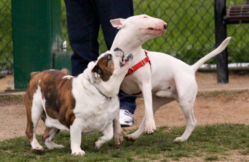 Parques para perros: seis errores que cometemos