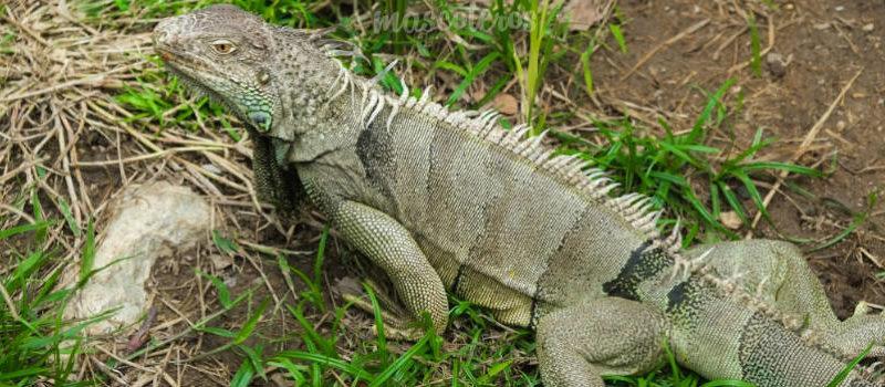 Reptiles: La termorregulación durante el verano