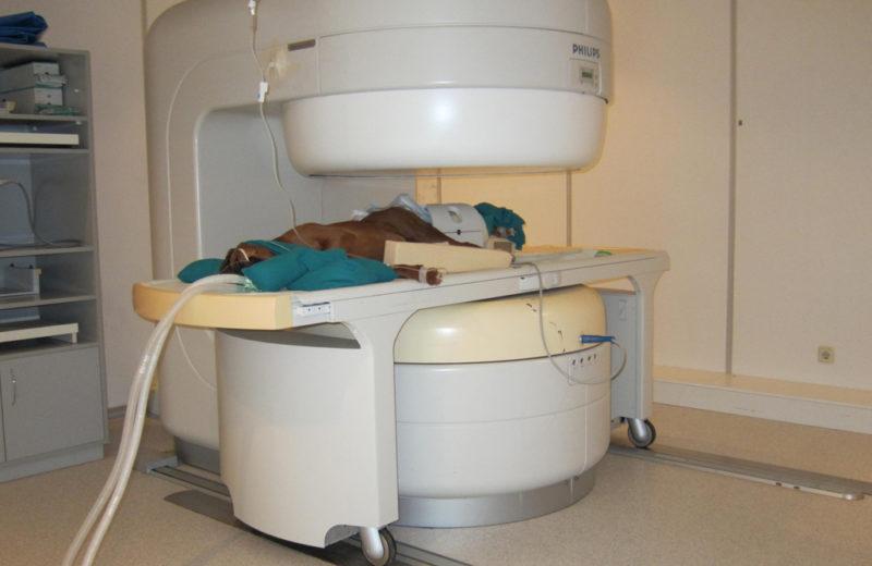 Resonancia magnética nuclear veterinaria ¿qué es?