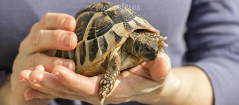 Alimentación de las tortugas