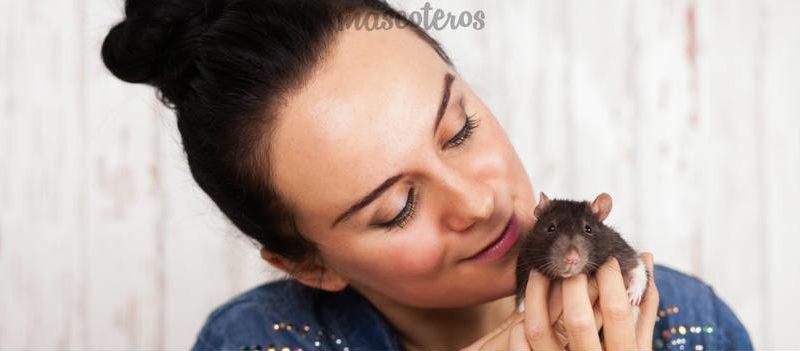Como enseñar trucos a tu rata