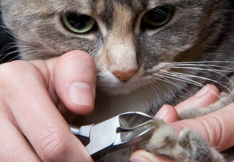 Cómo cortar las uñas al gato en 5 pasos