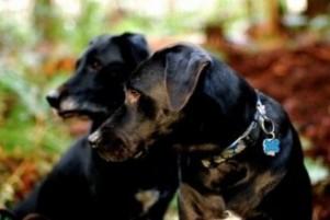 ¿Cómo cambia el carácter de un perro esterilizado?