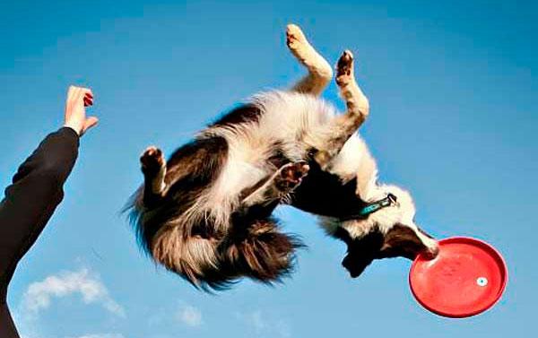 Claves para motivar a tu perro