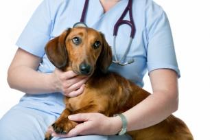 Diputados de APDDA plantean bajar el IVA de los servicios veterinarios, del 21% al 10%