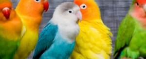 ¿Se aburre tu ave?