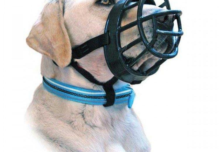 Bozales para perros: ¿cómo acostumbrar al perro?