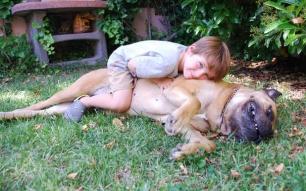 Los niños a veces no son los mejores amigos de los perros