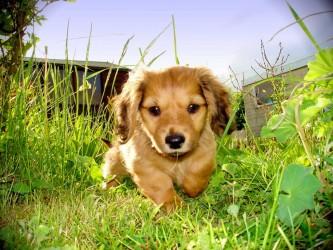 ¿Por qué los perros comen hierba y después vomitan?