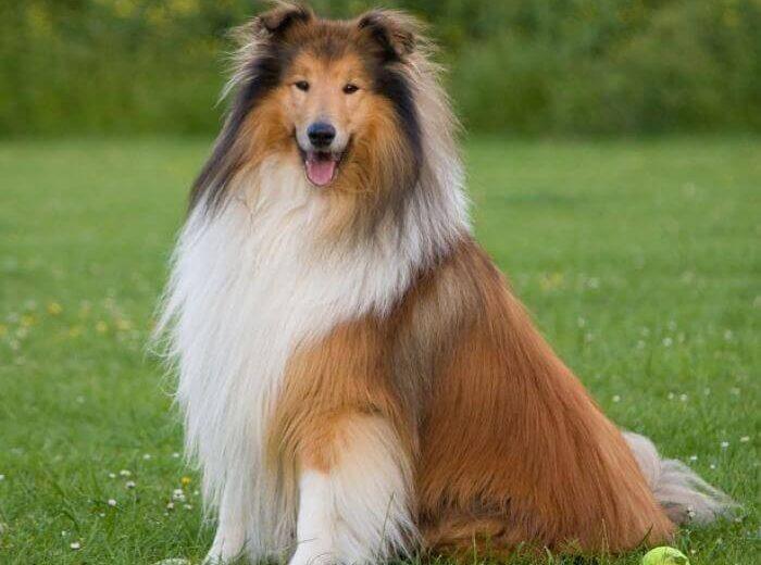 La importancia de cepillar el pelo de tu perro