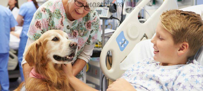 ¿Son beneficiosas las mascotas en los hospitales?