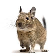 La dentición de los pequeños mamíferos
