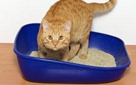 Por qué la arena aglomerante puede ser una buena opción para tu gato y para ti
