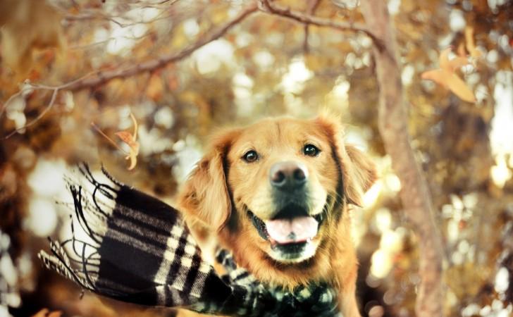 Cuidados invernales para tu perro
