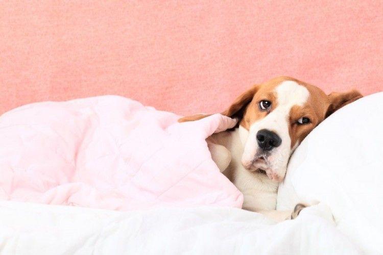 Ocho señales de que tu perro sufre artritis