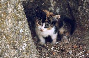 Adoptar a un gato de la calle: guía básica