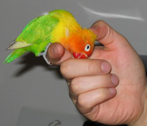 Cinco cosas que jamás debes hacer cerca de un ave