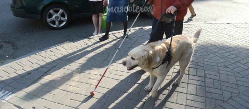 El día a día de un perro guía y su humano contado de primera mano