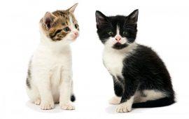 Televisión en directo para ayudar a los gatos sin hogar