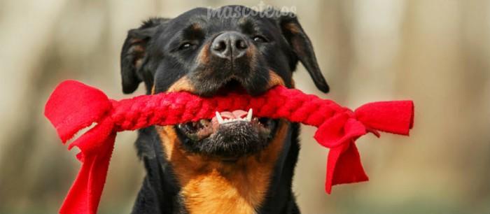 ¿Qué juguete es el adecuado para un perro que rompe todos?