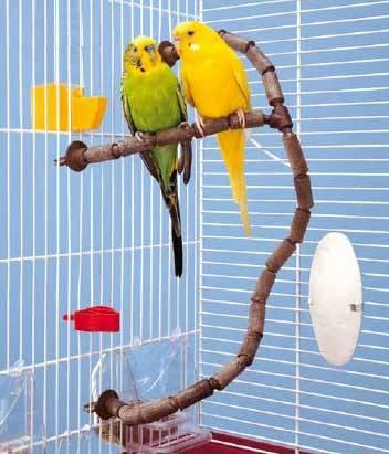 Aclimatación de pájaros
