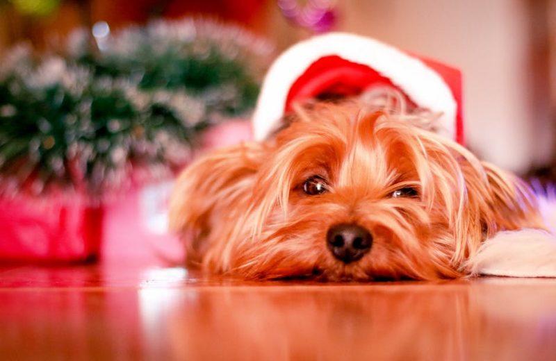 Perrito en Navidad