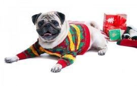 ¿Qué regalo al perro en Navidad? 6 ideas peludas