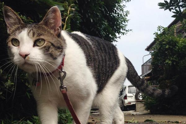 El gato un compañero diferente… paseos con el gato