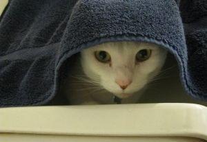 ¿Los gatos necesitan bañarse?