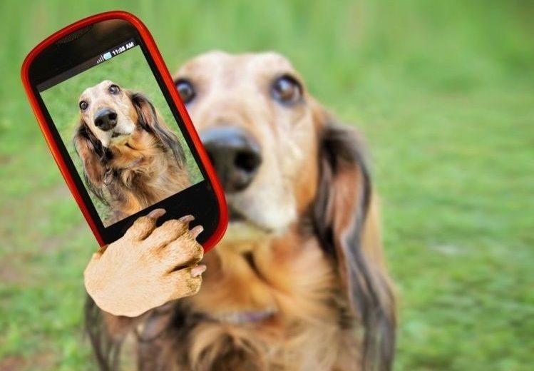 Wizapet, Doglogbook y The Petter son tres aplicaciones creadas por veterinarios para cuidar de la salud de los canes, prevenir problemas de conducta e incluso evitar que se pierdan