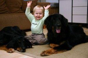 Niños y defensa de los animales: cinco pautas para educarles en casa