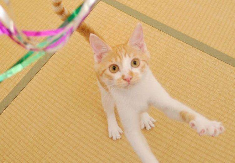 ¿Cuánto tiempo hay que jugar con el gato?