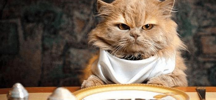 Cómo alimentar a un gato sibarita