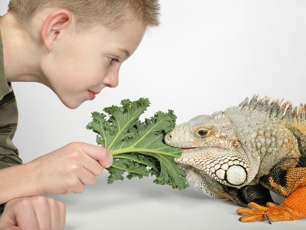 Alimentación en las iguanas