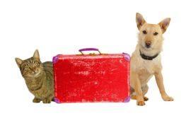 Trámites para viajar con animales de un país a otro