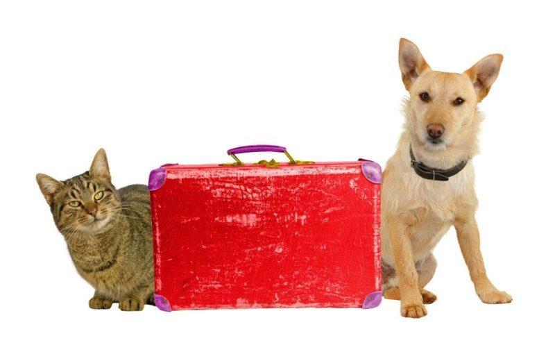 Perro y gato con maleta