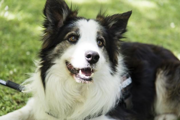 Un perro que detecta venenos en parques de Zaragoza
