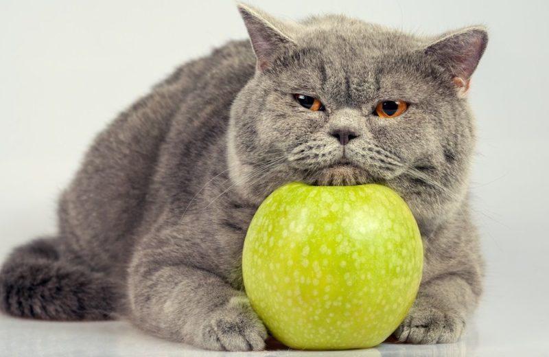 ¿Por qué hay frutas tóxicas para los gatos?