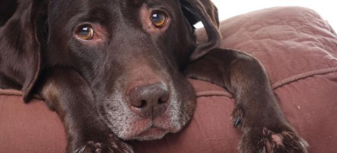 Situaciones que provocan estrés en los perros y cómo evitarlo