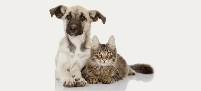 ¿Por qué elegir un alimento procesado para nuestras mascotas?