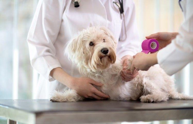 Cómo curar heridas a perros y gatos