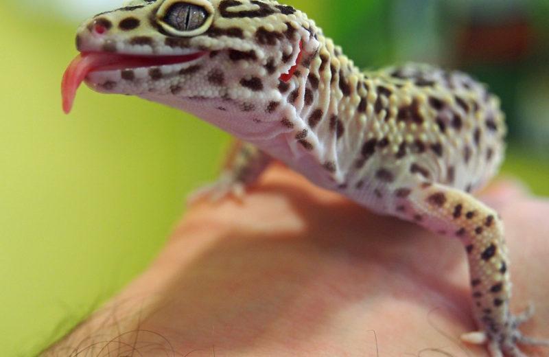 El ambiente ideal para tu reptil