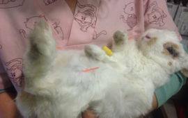 ¿Qué es la acupuntura veterinaria?