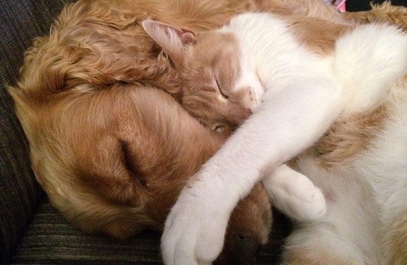 Adoptar un gato con un perro ya en casa