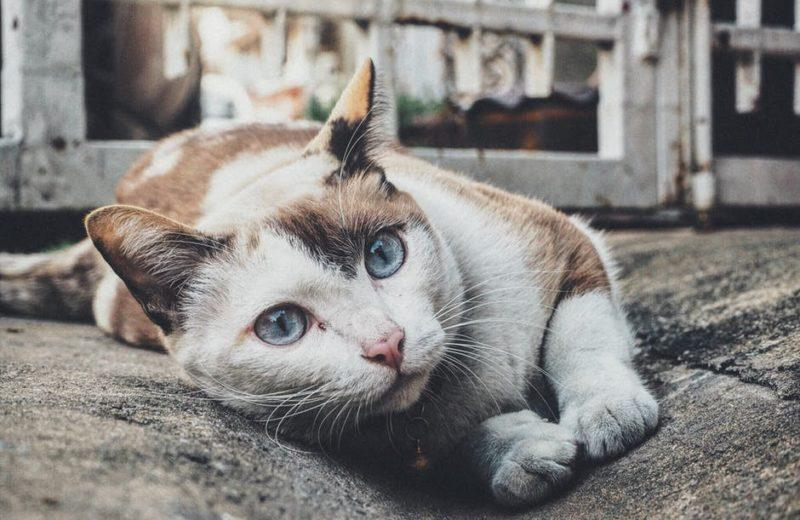 Lombrices en gatos, ¿cómo se contagian y cómo prevenirlas?