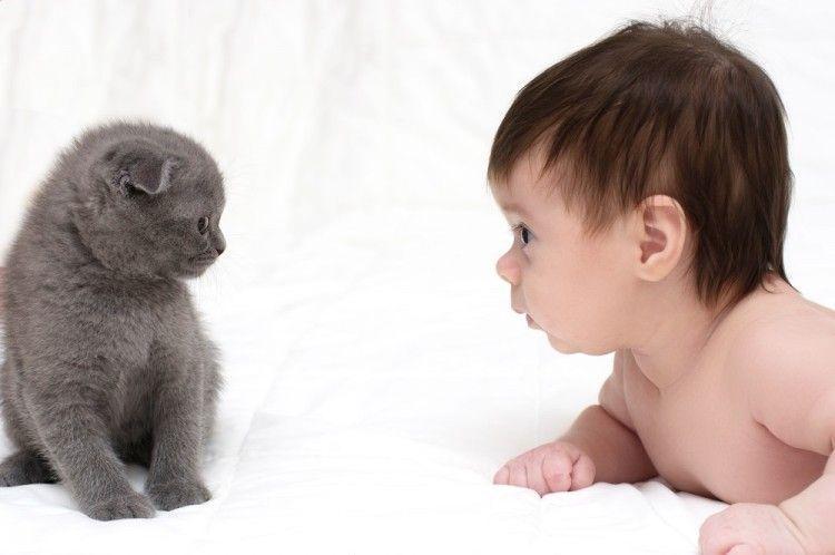 Cinco lecciones que los niños aprenden de los gatos