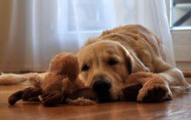Cómo proteger a tu perro de la leishmaniosis
