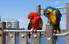 Exoparasitosis de Las Aves