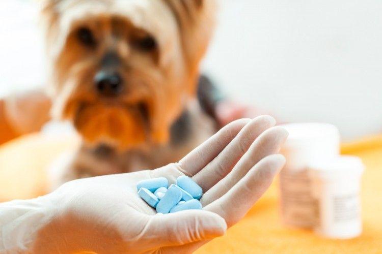 ¿Puedo darle ibuprofeno a mi perro?
